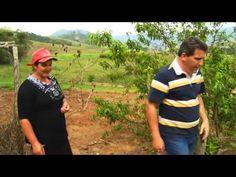 Trilhas do Sabor - Formiga Içá e Culinária de Silveiras/SP - Ep. 90 - Parte 2 - YouTube