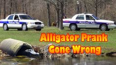 Funny Pranks - Alligator Prank Gone Wrong Funny Baby Memes, Funny Gags, Super Funny Quotes, Funny Quotes About Life, Funny Tweets, Scary Pranks, Funny Pranks, Selfies, Love Quotes For Crush
