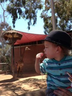 Finn checking out a giraffe at San Diego Zoo