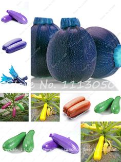 [Visit to Buy] 20 Pcs Rare Summer Squash Seeds,Zucchini Seeds,Organic Heirloom Bonsai Vegetable & Fruit Seeds,Potted Plant for Home & Garden #Advertisement