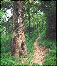 I hope to hike the Appalachian Trail one day!