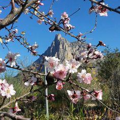 Pasando el día en almendros y flores. #almendrosenflor #desdeelparaiso #ItxasmendiNoCuida #Finestrat