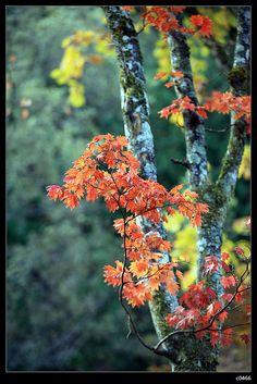 新穗高溫泉 is a beautiful place of middle Japan, there were many maple trees turned red ,yellow in autumn , we took the chance to take beautiful and colorful scenery     Japan is just a GREAT and LOVELY place to shop, visit, and the girls. But money is always the problem. click the picture and find out how to solve it.