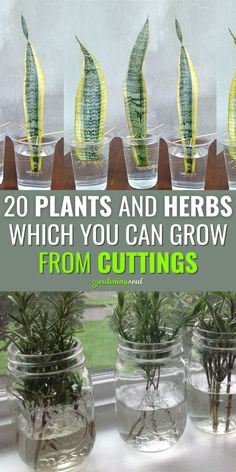 Easy Garden, Lawn And Garden, Indoor Water Garden, Garden Bed, Edible Garden, Inside Plants, Home Vegetable Garden, Plant Cuttings, Growing Vegetables