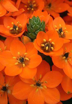 Sunstar brillian orange.  Yum