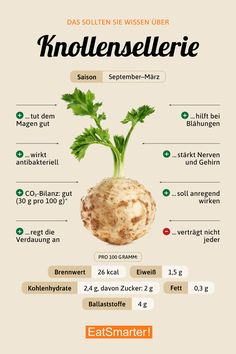 celery root - Knollensellerie You should know about celeriac Grape Nutrition, Nutrition Tips, Health And Nutrition, Holistic Nutrition, Nutrition Tracker, Nutrition Pyramid, Broccoli Nutrition, Watermelon Nutrition, Nutrition Quotes