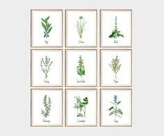 Culinary Herbs Art Print SET of 9. kitchen wall art, herbs and spices prints, gardening print, gardening art, kitchen interior, herb drawing