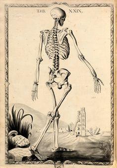 Plate XXIX. John Fotherby. Anatomy. 1729-30.