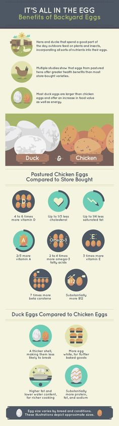 It's All In The Egg: Benefits of Backyard Eggs