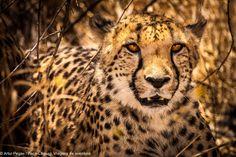 Etosha Park Namibia Fox, Africa, Park, Animals, Adventure Trips, Travel, Animales, Animaux, Parks
