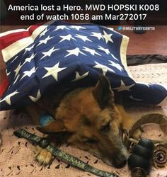 God Bless & RIP Military Working K9 Hopski! Thank you for your service to our country!