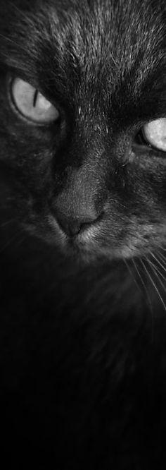 ♥ BlackCat