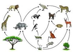 Image result for grassland food web starting with a tree
