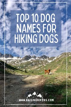 Naming a new pup? Plan to raise an outdoorsy dog who will hit the hiking trails with you? Check out these mountain lover dog names for the outdoorsy dog! We named our Labradoodle, Jasper after Jasper National Park. See the other names that were on our list! #hikingdogs #labradoodle #outdoordognames Hiking Dogs, Hiking Trails, Strong Dog Names, Puyallup Tribe, North Cascades National Park, Mountain Hiking, Family Adventure, Labradoodle, Family Dogs