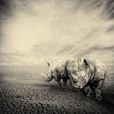 rhino #iamforrhinos #iam4rhinos