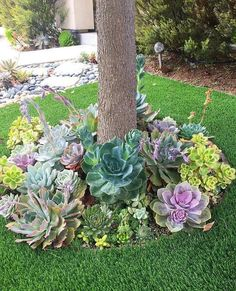 Garden Landscaping 47 Enchanting DIY Vertical Planter 47 Enchanting DIY Vertical Planter Such A Dreamy Garden Of Succulents Gardening Succulents Succulent Landscaping, Succulent Gardening, Front Yard Landscaping, Planting Succulents, Easy Landscaping Ideas, Succulent Garden Ideas, Succulent Outdoor, Succulent Plants, Succulents Diy