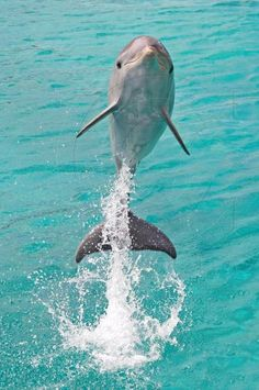 Jumping Baby Dolphin: