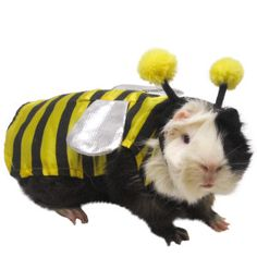 You had me at bzzzz, PetSmart.  All Living Things® Bumble Bee Small Pet Costume | Costumes | PetSmart