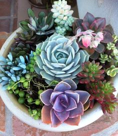 Such lovely shapes and colors, an indoor succulent arrangement adds interest to any space.