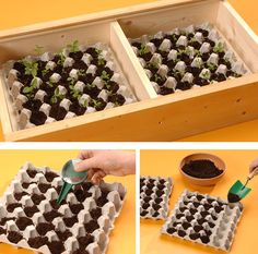 DIY seedbed with egg tray Succulent Gardening, Hydroponic Gardening, Succulents Garden, Container Gardening, Preschool Garden, Bottle Garden, Vegetable Garden Design, Permaculture, Garden Beds