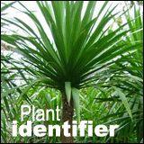 thailand tropical plant identifier