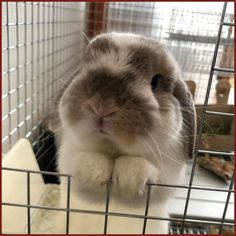 The cutest face to see.a rabbit (or really any animal) begging. Cute Little Animals, Cute Funny Animals, Cute Baby Bunnies, Cute Babies, Fluffy Animals, Animals And Pets, Cute Animal Pictures, Cute Creatures, Pet Birds