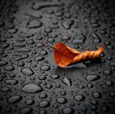 #autunno #web