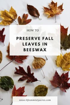 Keep the beauty of Fall around your home a little longer by preserving leaves in beeswax. It's an fun and easy project for all ages. Great for crafting, diy, and decorating. Check out this how to tutorial. Easy Projects, Projects For Kids, Crafts For Kids, Autumn Activities For Kids, Thanksgiving Activities, Dollar Store Crafts, Crafts To Sell, Fall Snacks, Autumn Crafts
