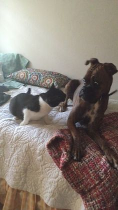 This dog who had zero chill around the cat.   The 38 Most Awkward Dogs Of 2015