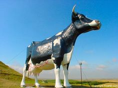 Just off of I-94, Salem Sue is located in New Salem, ND.  38 feet high, 50 feet long, 12,000 lbs.  This is quite a cow and quite the roadside attraction.  I give it two hooves up.