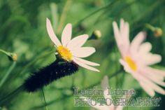 Caterpillar by Lapin Lune Photography. lapinlunephotography.blogspot.com