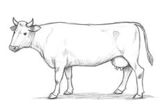 How to draw a cow step by step - Drawing Factory - Clip Art Library Animal Sketches, Animal Drawings, Drawing Sketches, Pencil Drawings, Drawing Animals, Sketching, Easy Drawing Steps, Step By Step Drawing, Cow Drawing Easy