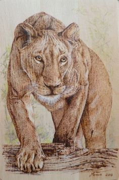 Pyrography on wood. A lioness stalking. Manon Massari. https://www.facebook.com/OfMiArt