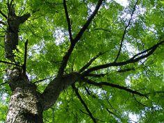 16 - leafy