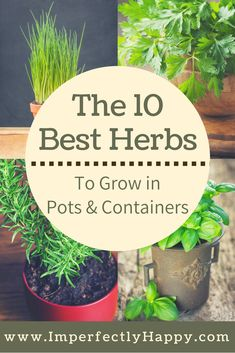 10 herbs that grow the best in pots and containers. Both medicinal herbs and culinary herbs for your home.The 10 herbs that grow the best in pots and containers. Both medicinal herbs and culinary herbs for your home. Container Herb Garden, Container Gardening Vegetables, Container Plants, Garden Plants, Herbs In Containers, Vegetable Gardening, Herb Planters, Herb Pots, Container Flowers