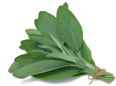 Sage for Hot flashes--Supplements of sage leaves can relieve hot flashes according to a 2016 study. It showed that hot flashes were reduced in a month and in 2 months. Sage teas have also been reported to help reduce menopausal symptoms. Alzheimer's Treatment, Gum Disease Treatment, Coconut Oil For Teeth, Coconut Oil Pulling, Sage Benefits, Health Benefits, Herbal Remedies, Home Remedies, Reverse Receding Gums