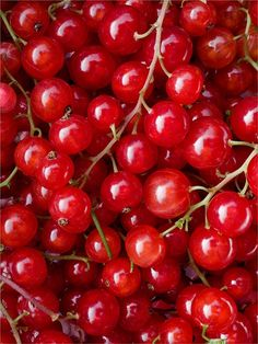 Red Currants by Richard Haughton Red Fruit, Fruit And Veg, Fruits And Vegetables, Colorful Fruit, Photo Fruit, Image Fruit, Simply Red, Red Aesthetic, Happy Colors