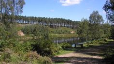 Fancy an outdoors family outing in the Midlands? Take the kids to Cannock Chase Forest and discover trails and activities everyone will love. Birches, Family Outing, Activity Ideas, Days Out, Centre, Vineyard, Places To Go, Trail, Activities