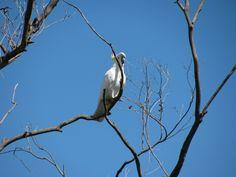 """#australia #sydney """"Sydney – von versteckten Buchten und lachenden Vögeln"""" lies mehr über den weißen Kakadu auf www.goodmorningworld.de"""