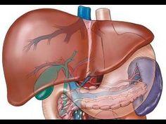 Qual a solução para o fígado gorduroso?  Dr Rocha