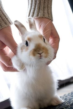Bunny says hi