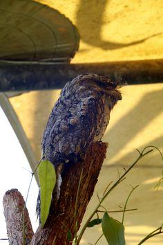 One grumpy-arse bird, and one tiny bird.Hartley's Crocodile Farm, Cairns.