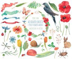 Field flowers by Eisfrei on Creative Market