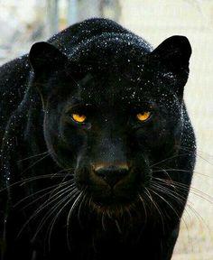 Stunningly beautiful :-)))
