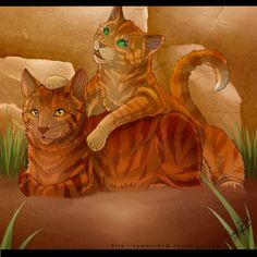 In 2016, the first book of the sixth series, The Apprentice's Quest, will be released, and will focus on Bramblestar and Squirrelflight's kits, Alderpaw (tom), and Sparkpaw (she-cat). Alderpaw will train as a medicine cat, while Sparkpaw will be a warrior.