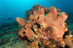 La esponja marina se erige como el animal más antiguo de la Tierra