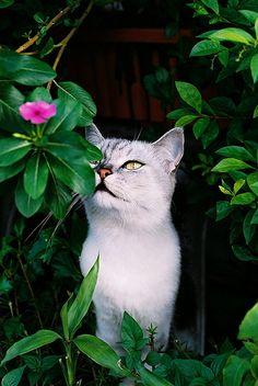 Beautiful cat in mysterious garden