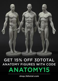 Affordable anatomy reference figures for artists - offer ends 31 July 3d Anatomy, Human Anatomy Art, Anatomy Poses, Anatomy Sketches, Muscle Anatomy, Anatomy For Artists, Anatomy Study, Anatomy Drawing, Body Reference Drawing