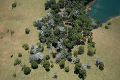 Fotografias Aéreas da Natureza - Grupo 4.    Fotografias Aéreas - Banco de Imagens Aéreas de Cássio Vasconcellos    http://www.fotografiasaereas.com.br/banco-de-imagens/natureza/natureza-4/