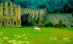 Ruins of Riveaulx Abbey, England